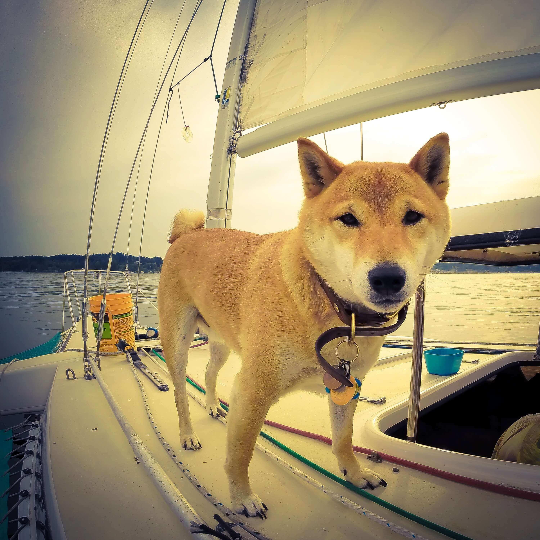 Hund auf Segelboot