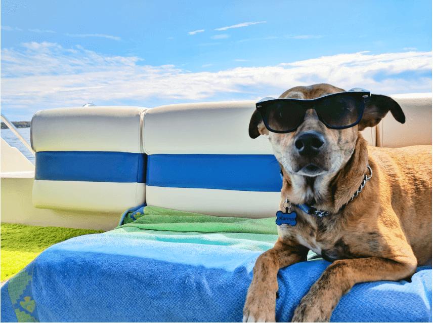 Hund auf Boot mit Sonnenbrille