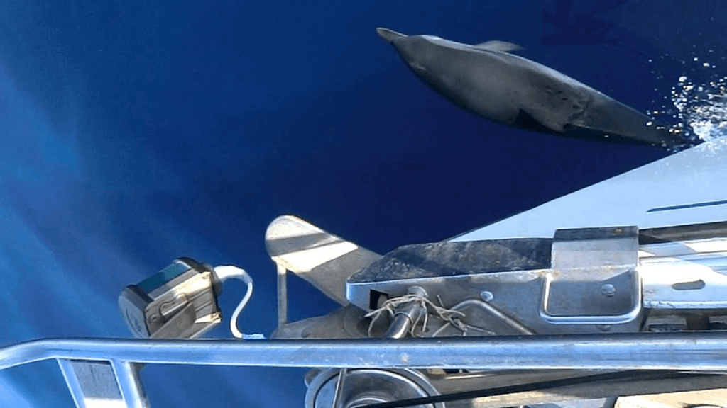 Delfine Kroatien