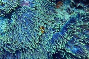 Gesundes Korallenriff dank nachhaltiger Produkte