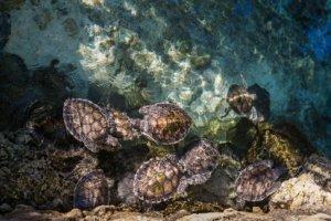 Landschildkröten im Wasser