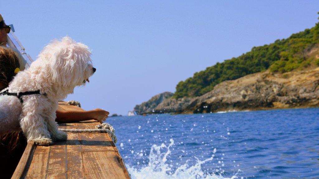 Hund geniesst das Bootfahren