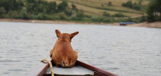 Hund von hinten auf Boot