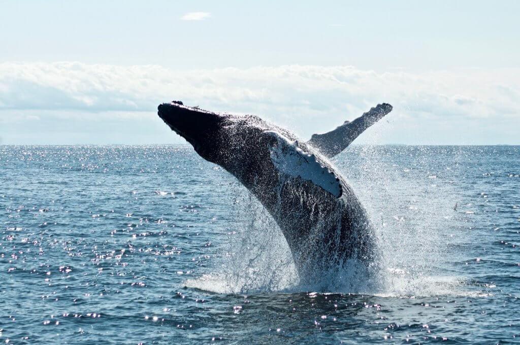 Wale beobachten im Mittelmeer