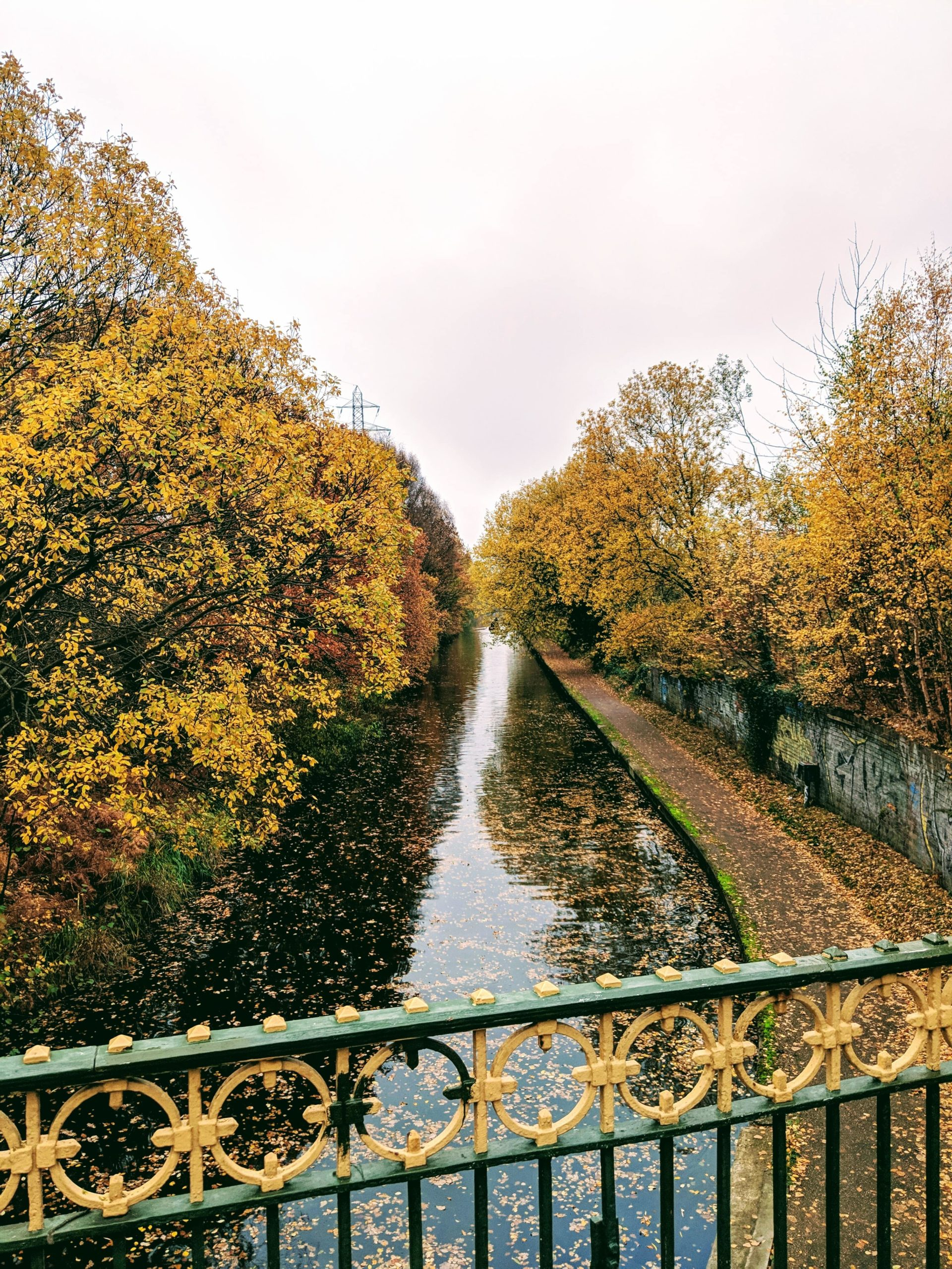 leafy trees overlooking canal in selly oak in brimingham