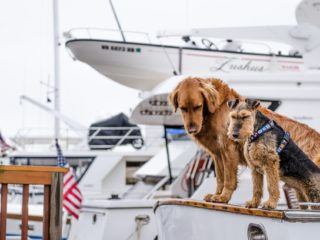 Setting sail on a boat with dogs