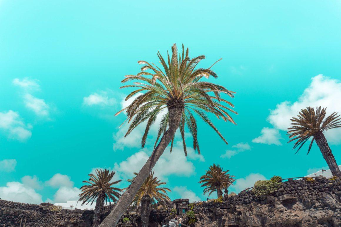 La vegetación es una de las mejores cosas de Canarias