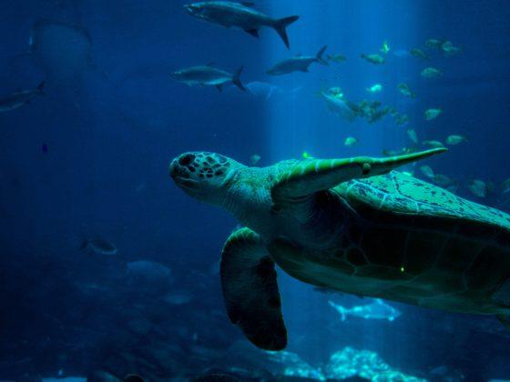 gestos ecológicos para cuidar los fondos marinos