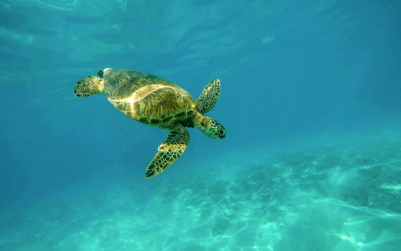 tartaruga marina madagascar