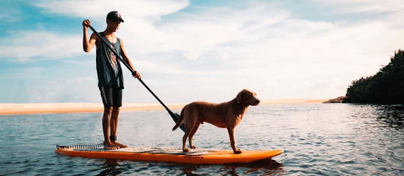 cane e padrone su paddle board