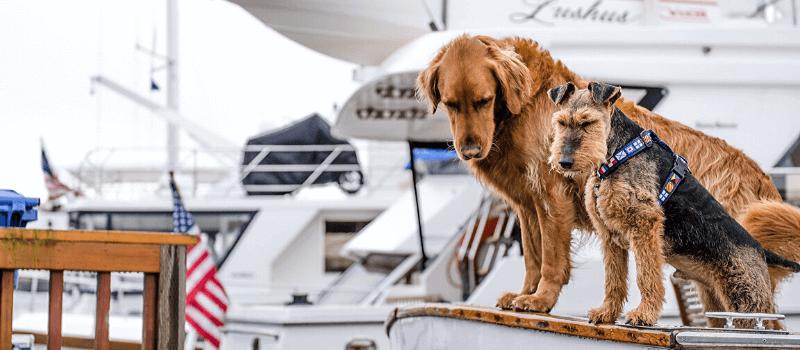 viaggiare con il cane