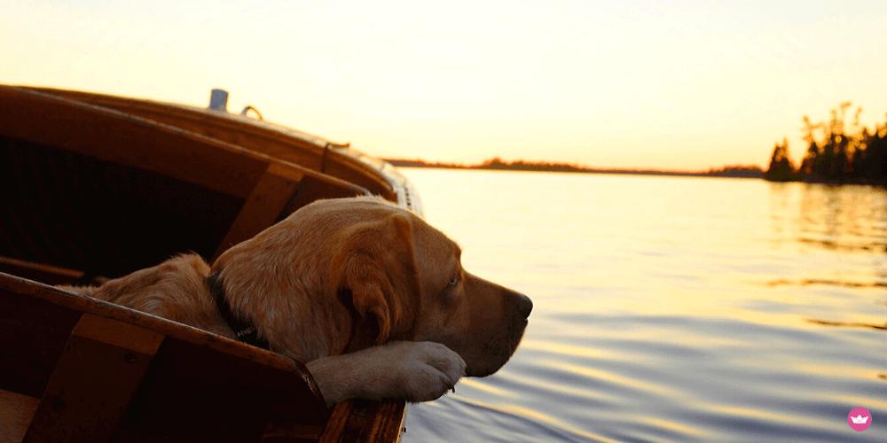 in barca con il cane