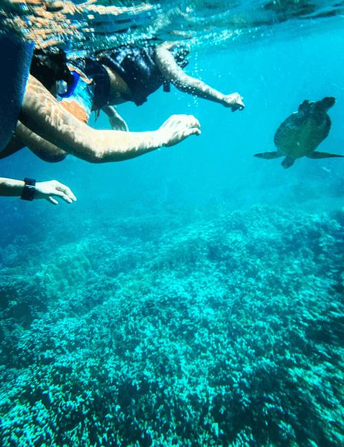vista del fondale marino con tartaruga