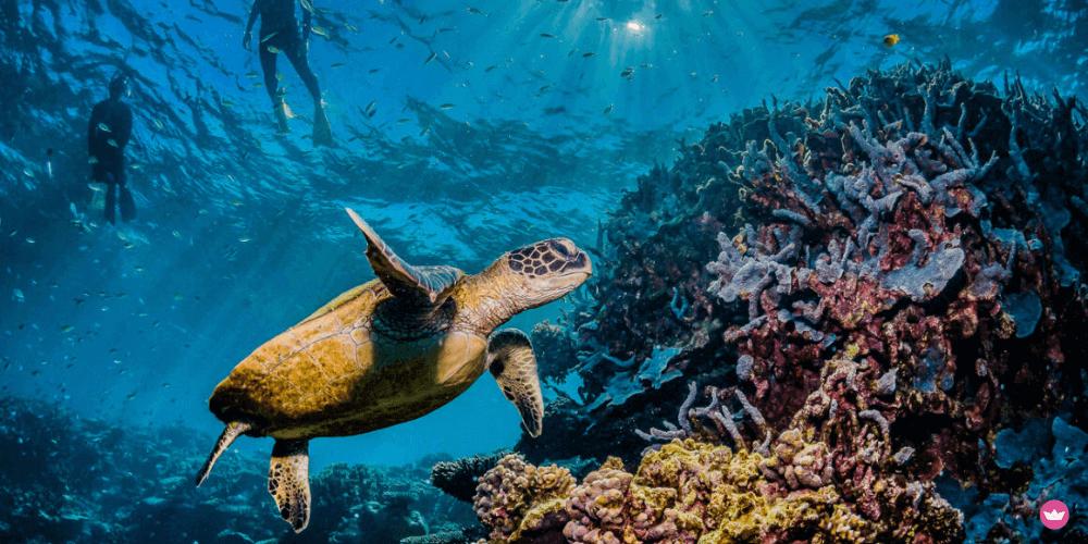 snorkeling nel mediterraneo