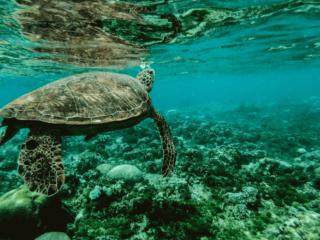 vacanze ecologiche