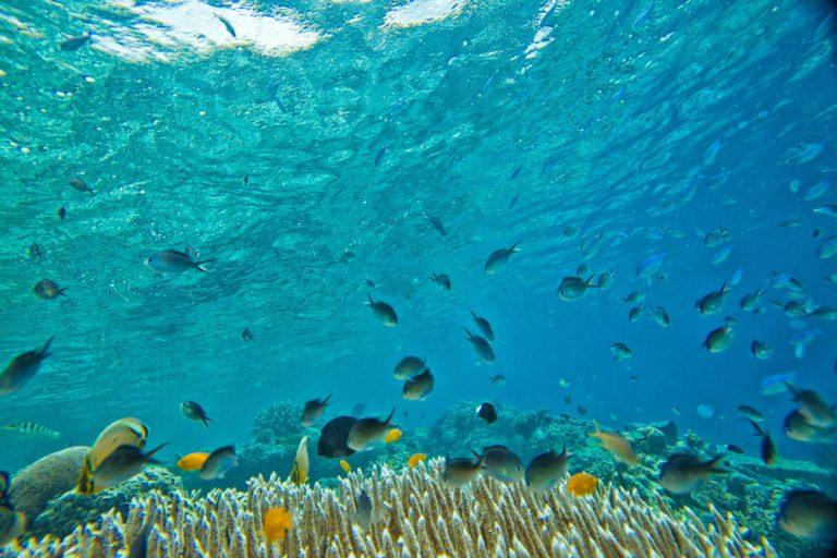 milieubewust reizen groene vakantie groener reizen klimaatverandering zeilvakantie zeilen plasticsoep duurzaam reizen zeilvakantie