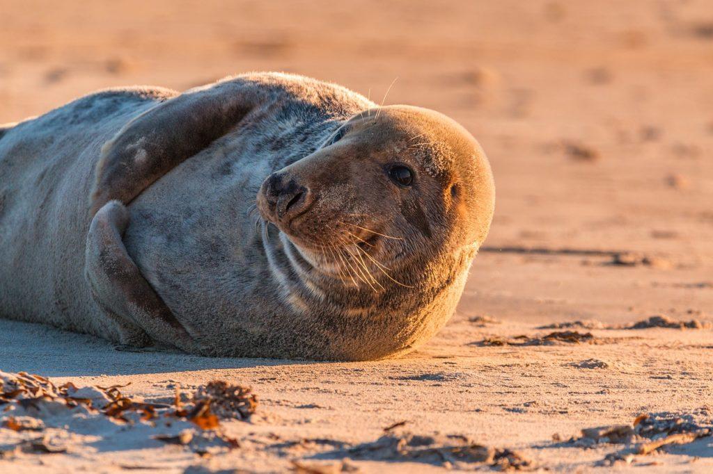 zeehonden spotten in de noordzee