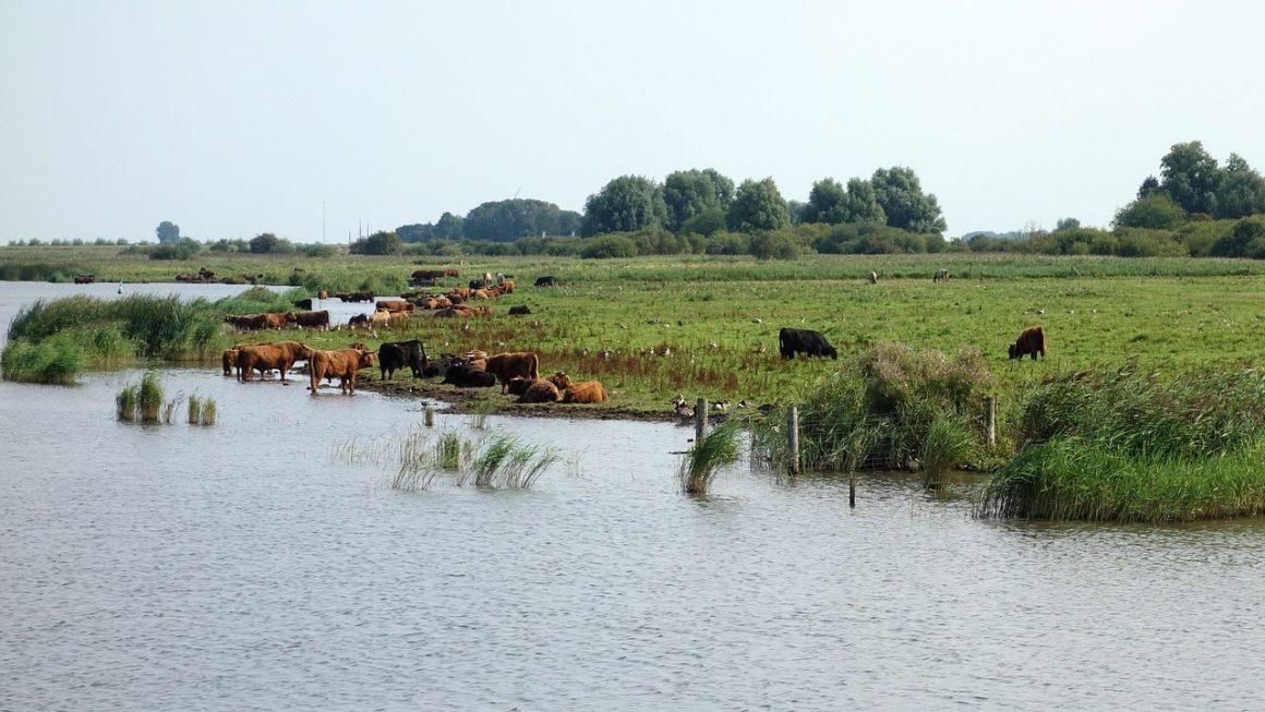 natuurgebieden friesland