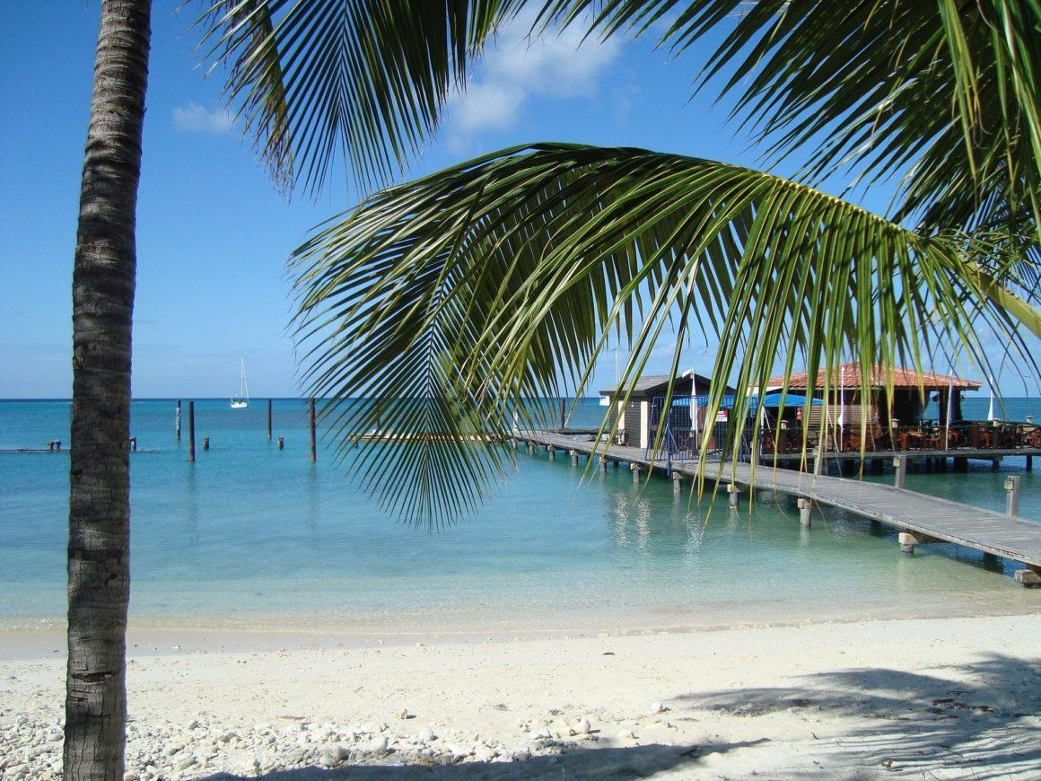Stijger in het water aan een strand met palmbladeren