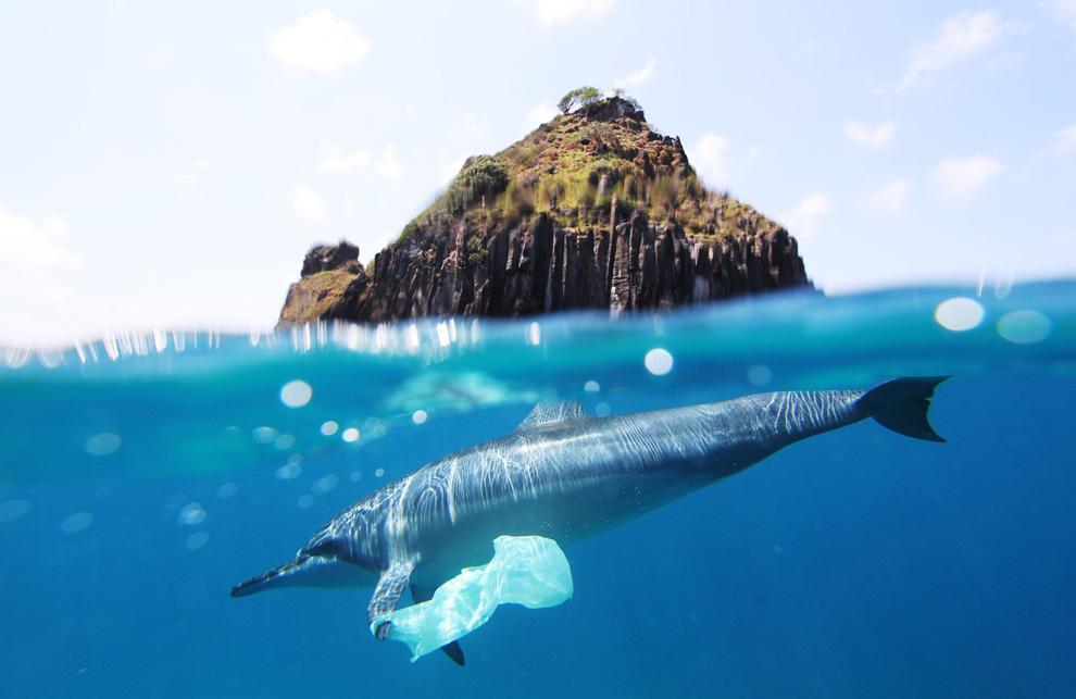 Delfin i plastik morze
