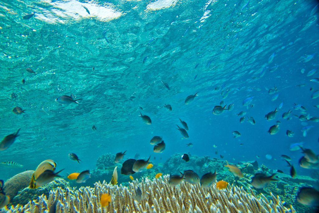 Morze organizmy morskie