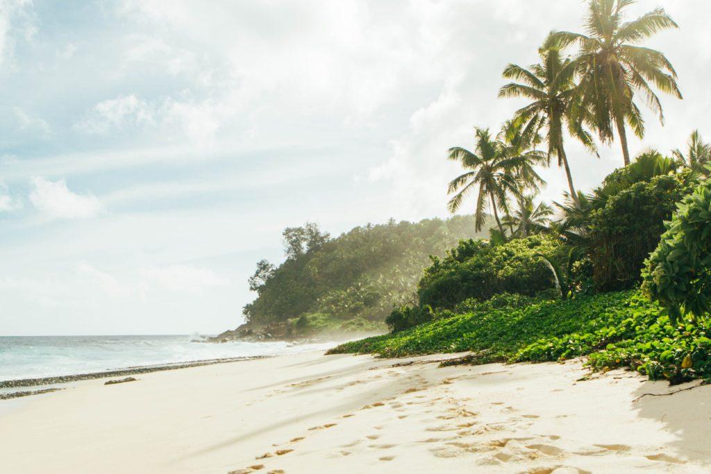 seszele plaża słońce palmy