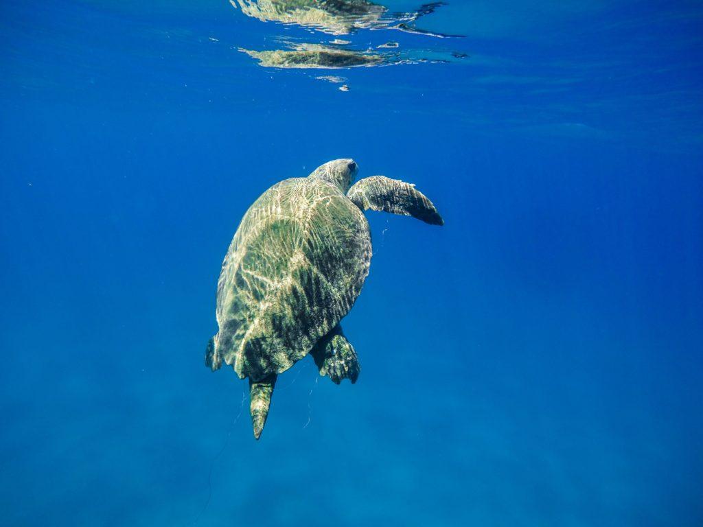 żółw woda zakynthos