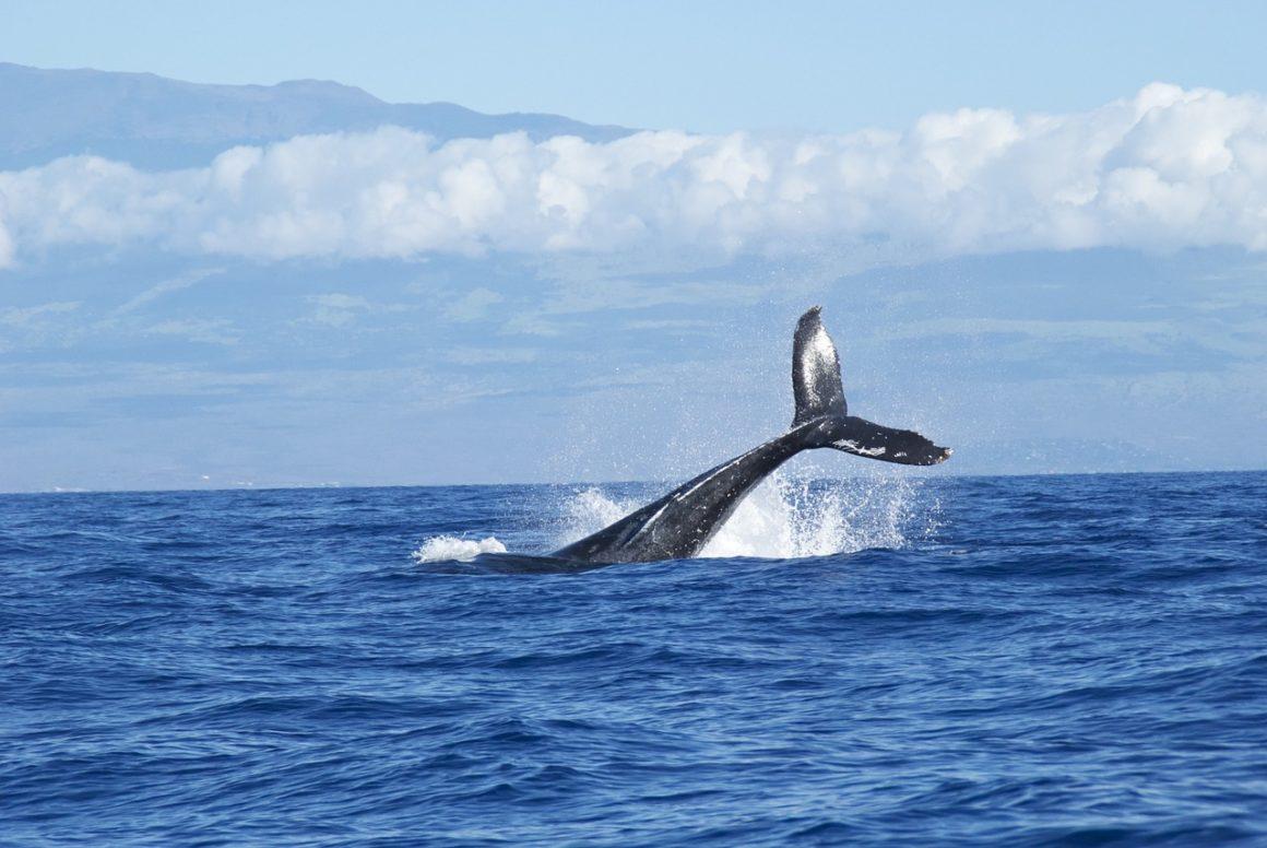 delfiny co warto zobaczyć na gran canarii