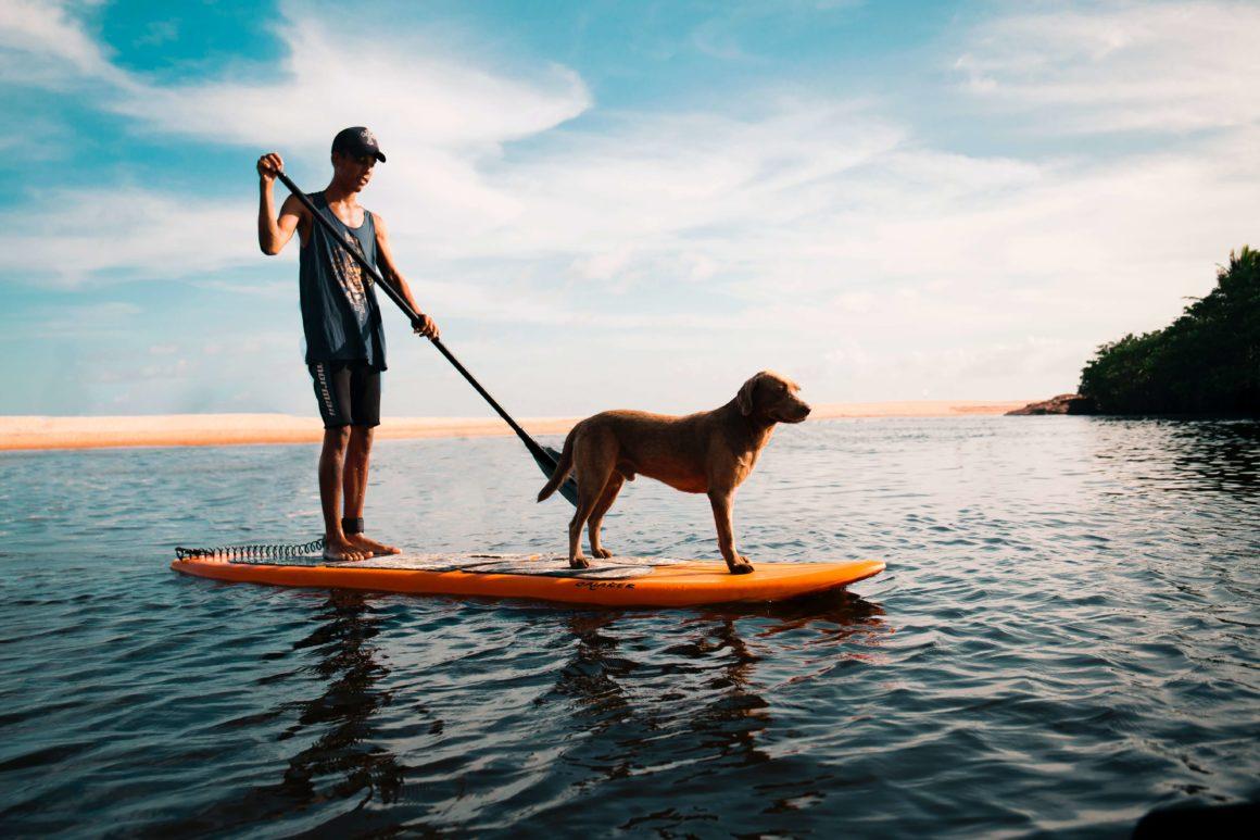 wakacyjny rejs z psem