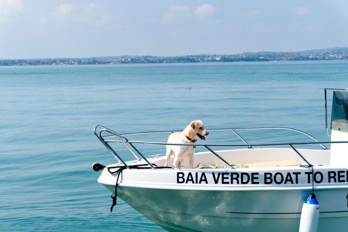 urlop z psem na łodzi