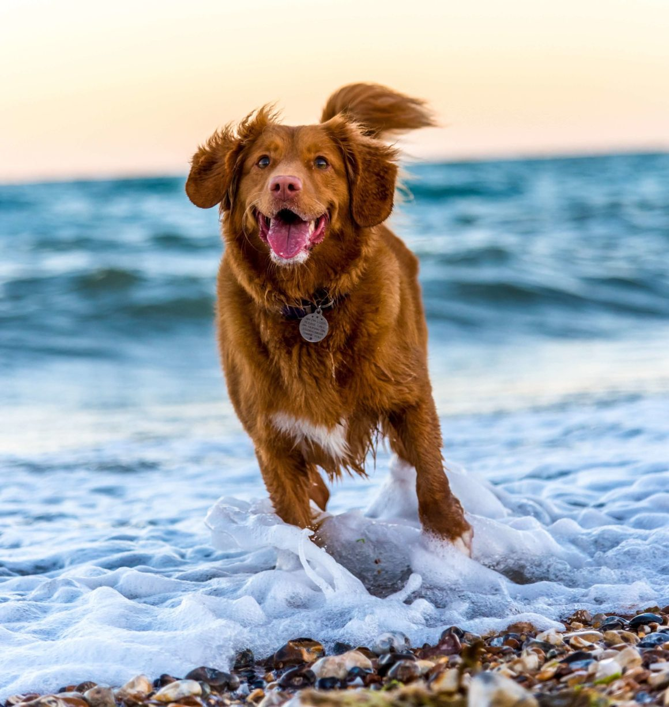 wakacje z psem na łodzi