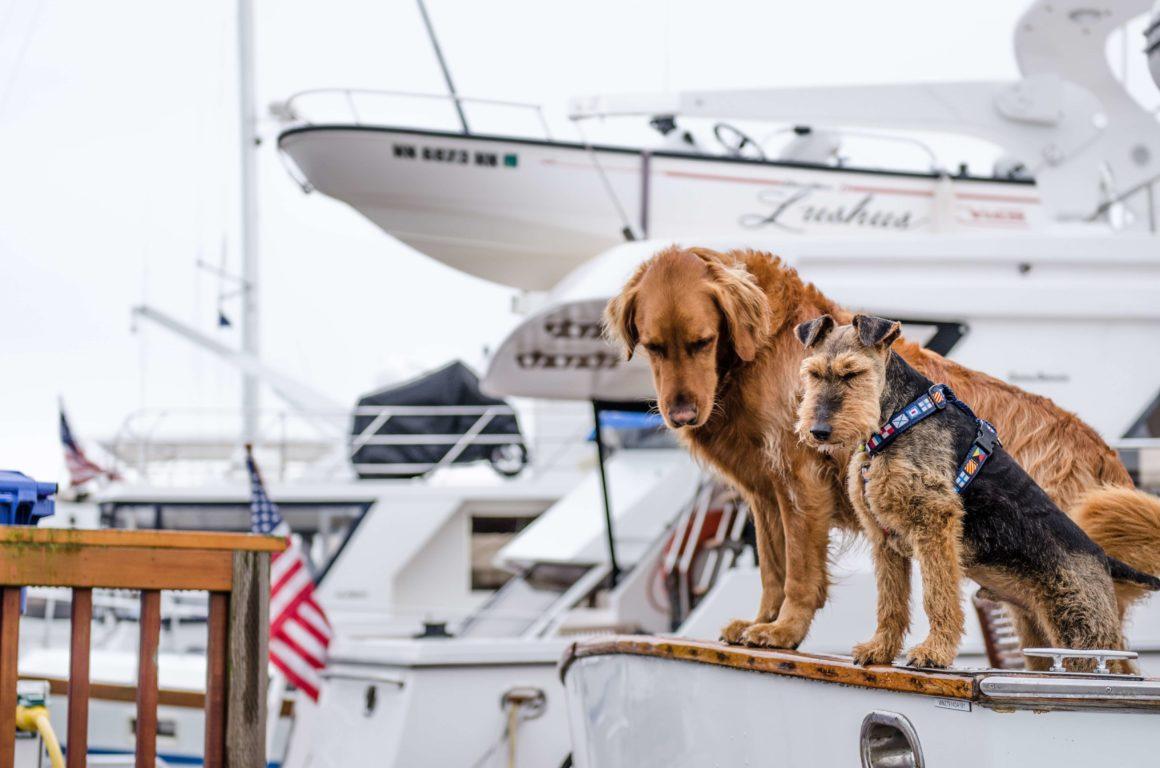 wakacje i urlop z psem na pokładzie łodzi
