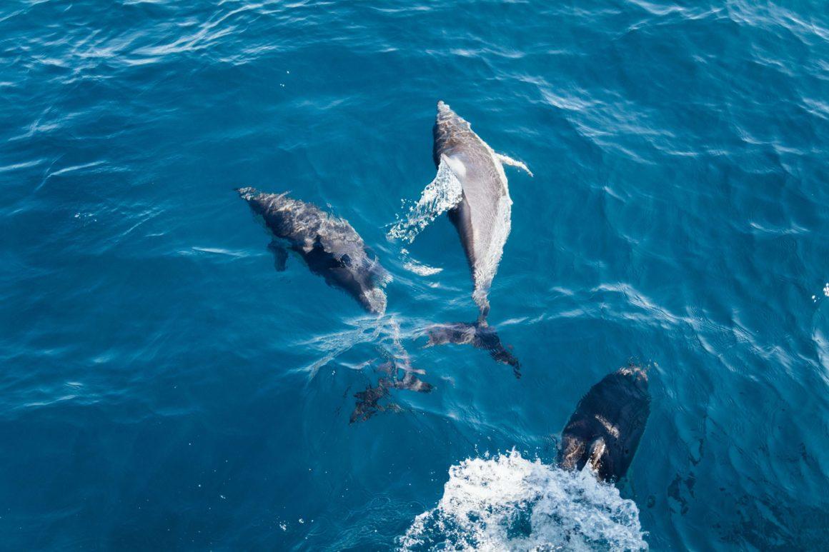 rejs z delfinami