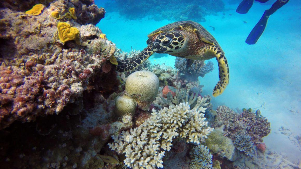 Rafa Koralowa w Australii - 5 nowych destynacji na żagle w 2021
