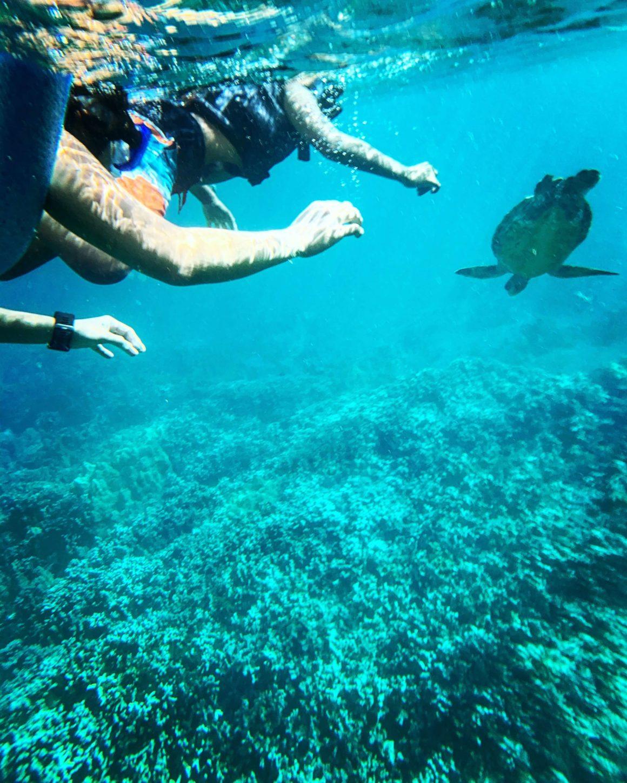 Nada como o mergulho e snorkeling para conhecer a vida marinha da região