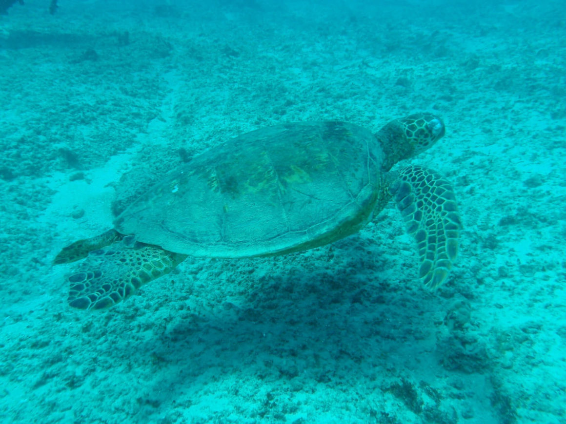 Descubra os corais, as tartarugas, as estrelas do mar e muito mais na Lagoa Azul