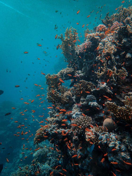 Preservar a biodiversidade marinha é um dos maiores focos do turismo sustentável em sua navegação