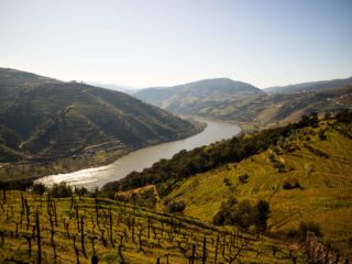 Conheça as melhores quintas portuguesas com um passeio de barco no Douro