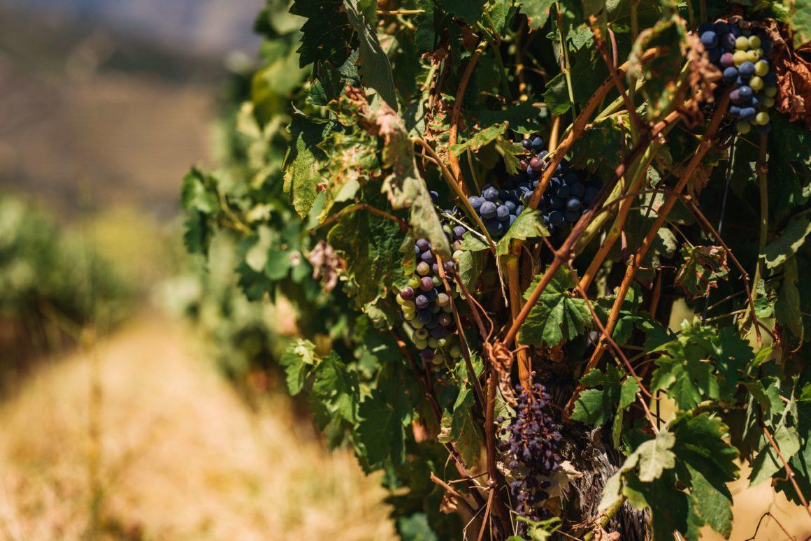 Região originária do famoso vinho do Porto, o Alto Douro Vinhateiro tem muito a oferecer!