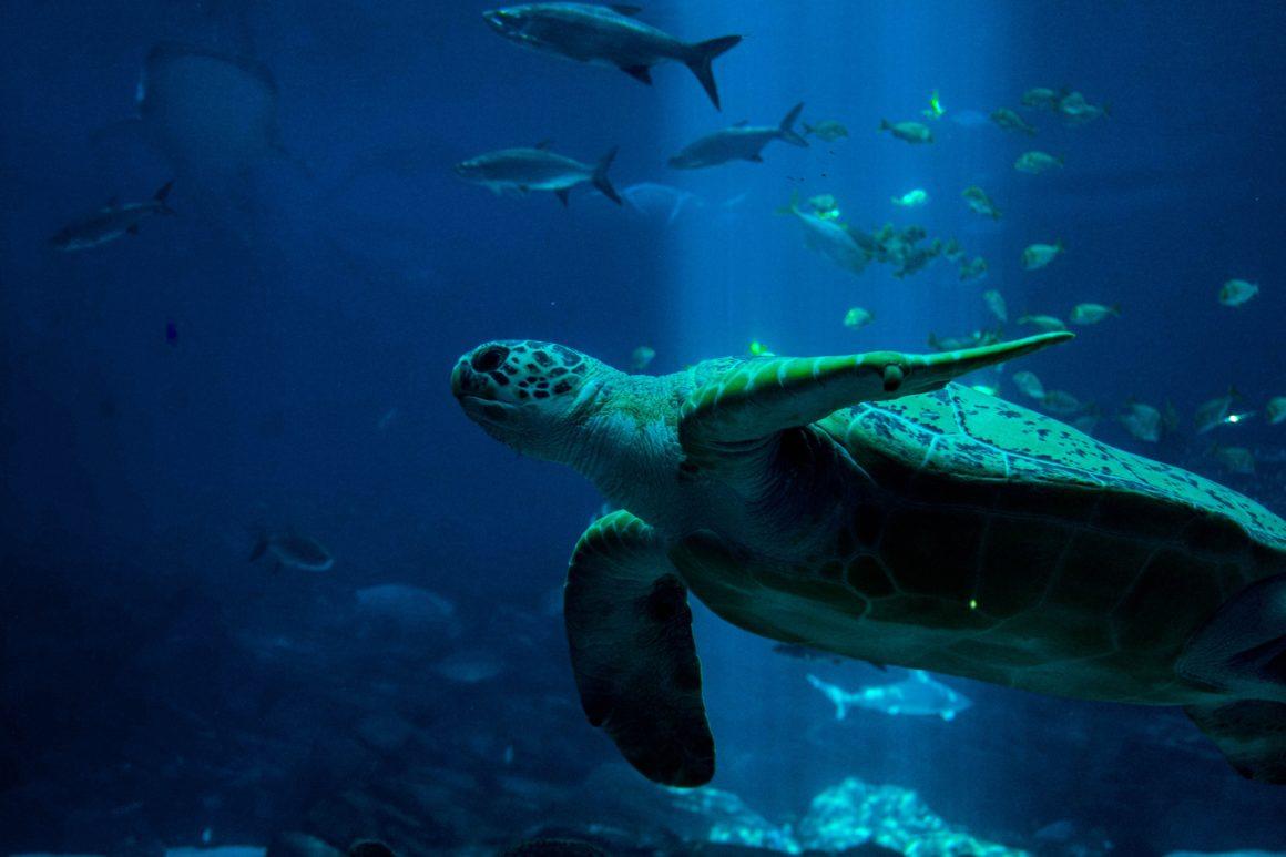 O turimos sustentável é um passo essencial para a preservação do meio ambiente