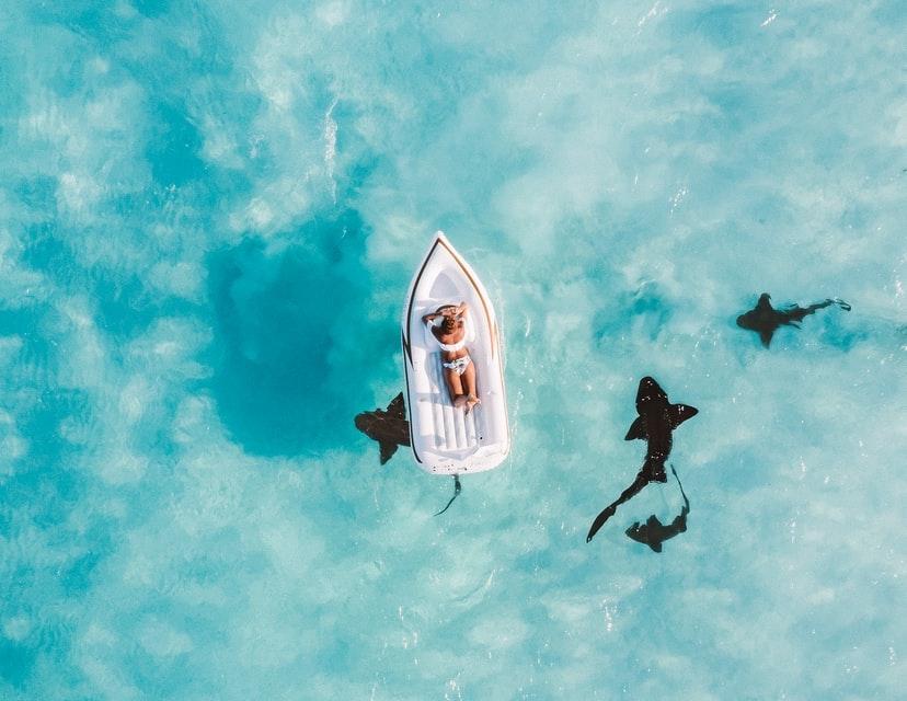 Nade em águas cristalinas, nade com tubarões, descubra navios naufragados e muito mais