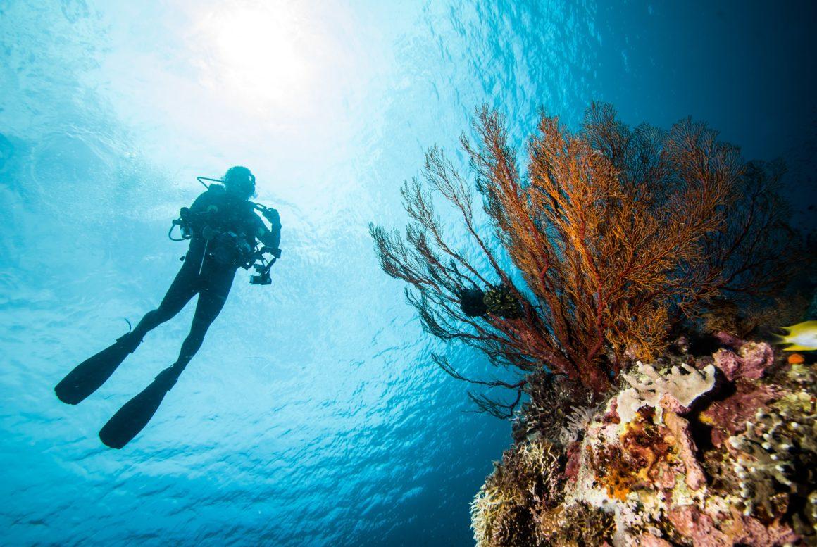 Não sabe o que fazer em Albufeira: mergulho!