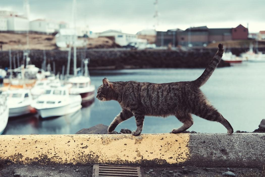 суеверия моряков