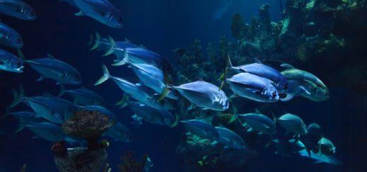 стая рыб