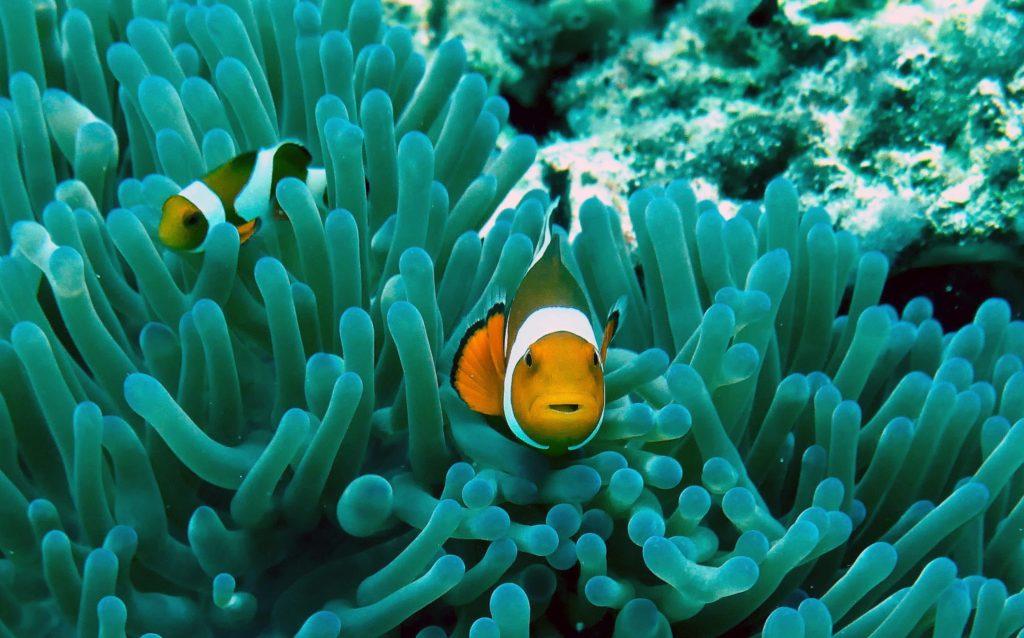 рыба в кораллах