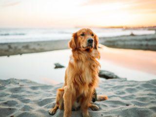 semester med hund