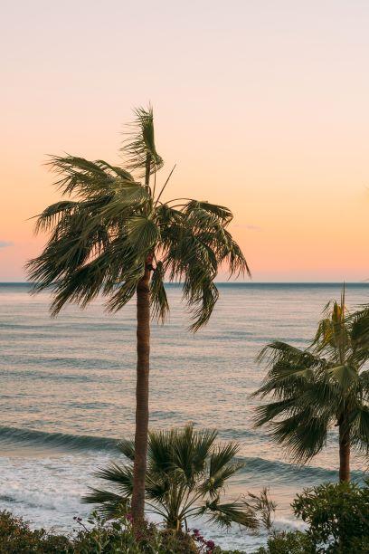Palm Trees From Santa Catalina Island