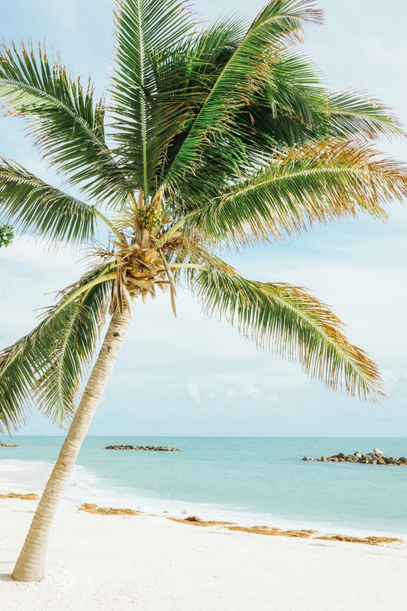 A Palm tree on a beach in Key West