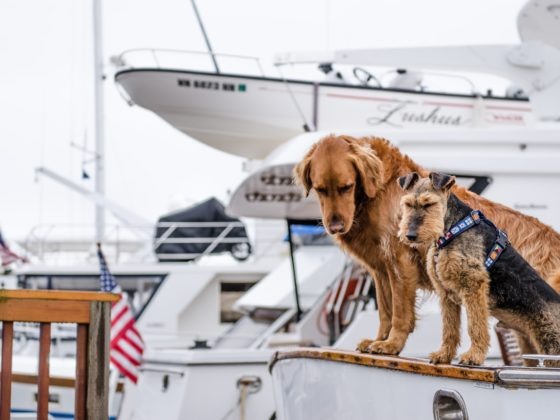 two dogs on board a motorboat