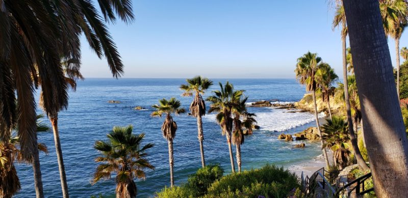Beach with Palm Trees in San Diego